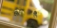 Coke Bumble Bees